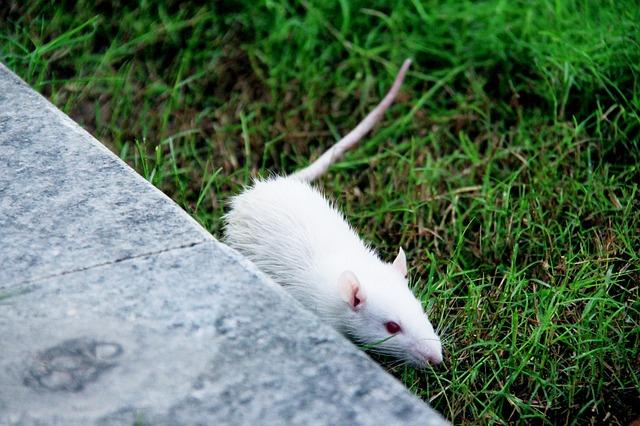 myška v trávě