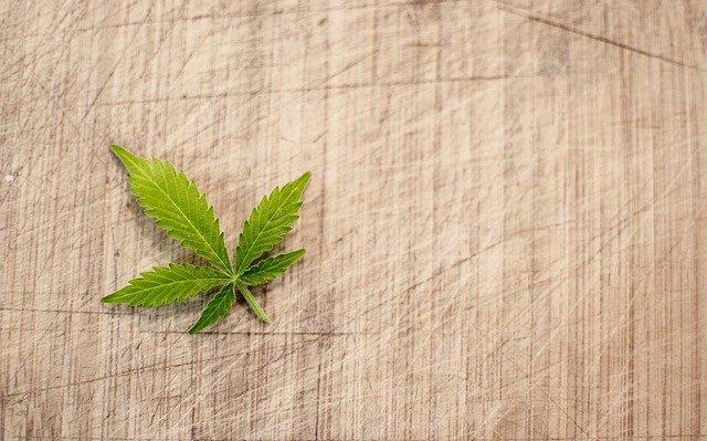 list marihuany na dřevu